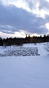 20180113ラベンダーの畑4