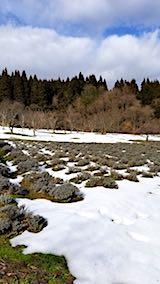 20180119ラベンダーの畑1