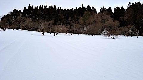 20180215ラベンダー畑の様子