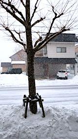 20180217外の様子昼前吹雪1