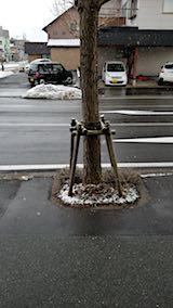 20180312外の様子朝雪が降り出す