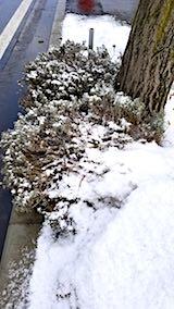 20180312まだとけぬ歩道の雪