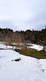 20180313八重紅枝垂れ桜のある斜面とラベンダー畑の様子