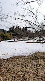 20180313雪のとけ始めた栗畑よりラベンダー畑を望む