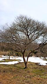 20180313山の様子花梅の木