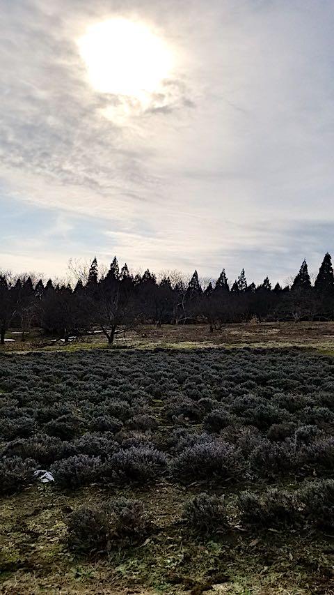 20180315ラベンダー畑の様子雪が消える4
