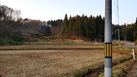 20180327山からの帰り道の様子杉の伐採3