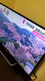 20180405吉野山の桜