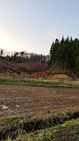 20180408山からの帰り道の様子伐採現場