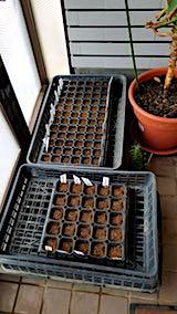20180415春野菜の種まき