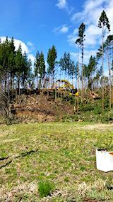 20180417山へ向かう途中の様子杉伐採現場