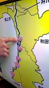20180417NHKテレビ秋田桜調査隊2