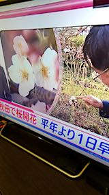 20180417NHKテレビ秋田で桜開花1