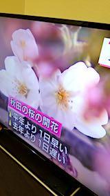 20180417NHKテレビ秋田で桜開花2