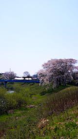 20180421太平川沿いの桜二ツ屋橋2