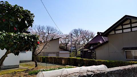 20180421太平川沿いの桜二ツ屋地区から望む