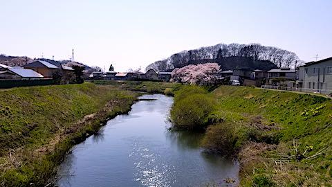 20180421太平川沿いの桜横森橋