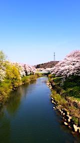 20180421太平川沿いの桜愛宕下橋1