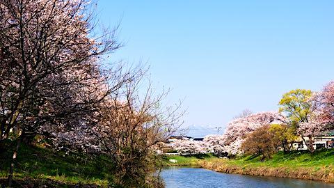 20180421太平川沿いの桜楢山から太平山を望む