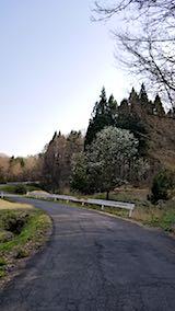 20180421山へ向かう途中の様子峠道こぶしの花