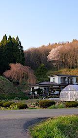 20180421山からの帰り道の様子山桜と枝垂れ桜