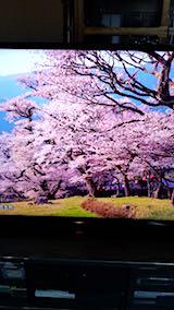 20180501三多気の桜2