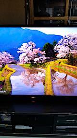 20180501三多気の桜3