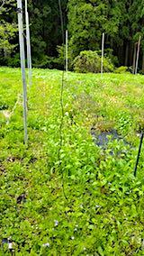 20180512草刈り前の野菜畑の様子1