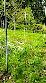 20180512草刈り前の野菜畑の様子3