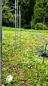20180512草刈り後の野菜畑の様子1