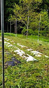 20180512草刈り後の野菜畑の様子3