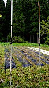20180512草刈り後雑草を取り除いた野菜畑の様子