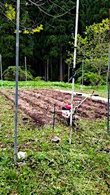 20180512草刈り後マルチを取り除いた野菜畑の様子