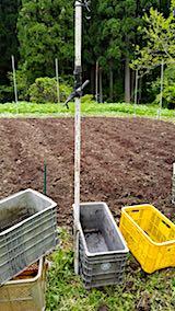 20180513野菜畑へ堆肥を入れる1