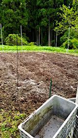 20180513野菜畑に石灰をまく1