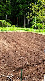 20180513野菜畑の耕す作業終了1