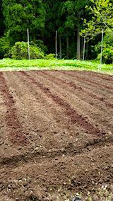20180513野菜畑へ堆肥を入れる2