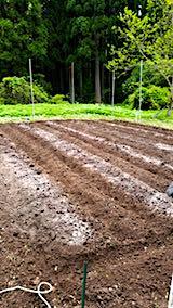 20180513野菜畑に石灰をまく2
