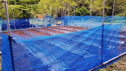 20180513野菜畑周囲を網で囲う作業2