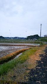 20180513山からの帰り道の様子田植え後の田んぼ
