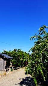 20180602外の様子昼過ぎ真っ青な空2