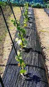 20180607野菜畑整理後2