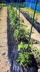 20180607野菜畑整理前3