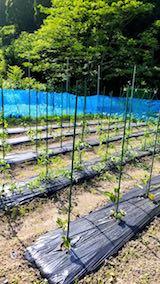 20180607野菜畑整理後1