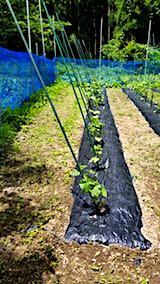 20180615野菜畑