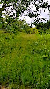 20180616草刈り前の様子1