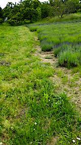 20180616ラベンダー畑周囲の草刈り前の様子3