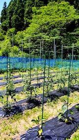 20180619野の菜畑