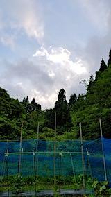 20180621野菜畑ネット増強作業3