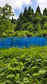 20180622野菜畑を取り囲むネット